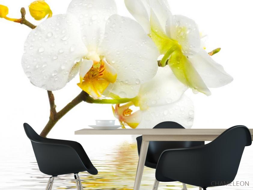 Фотообои Белоснежная орхидея в воде - 1
