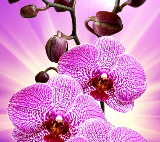 Фотообои леопардовая орхидея с сиянием 20484