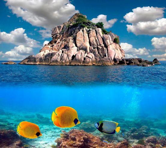 Фотообои Рыбы вблизи острова 0523