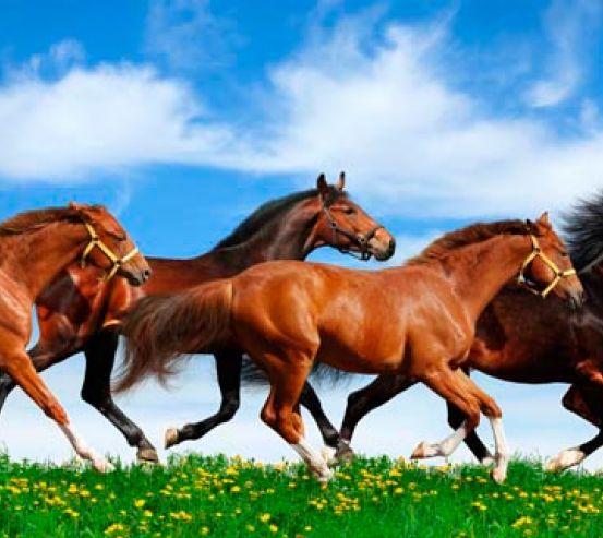 Фотообои Табун бегущих лошадей 2935