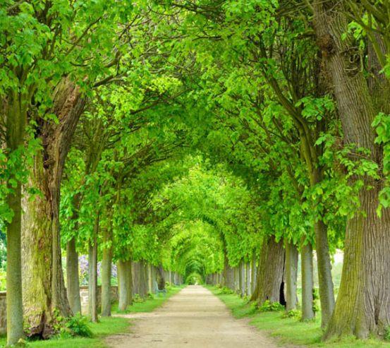 Фотообои Аллея из деревьев 24570