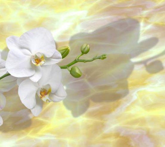 Фотообои белые орхидеи на  желтом фоне 21114
