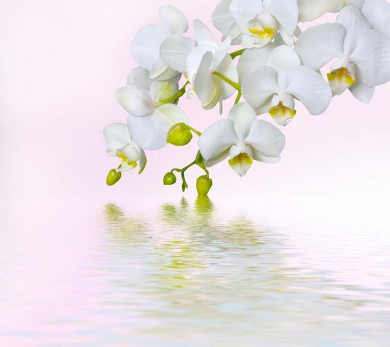 Фотообои белая орхидея над водой 20468