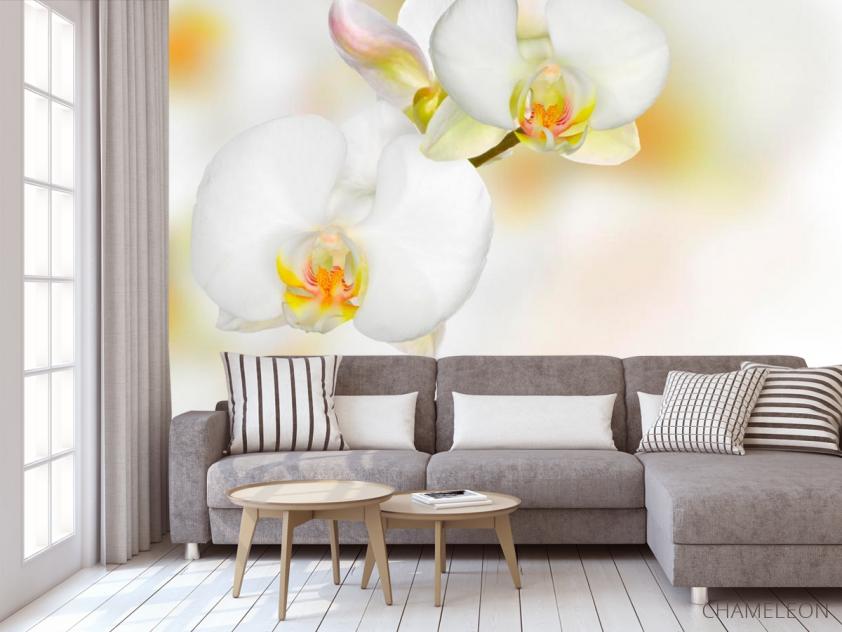 Фотообои Орхидеи белые с желтым - 3