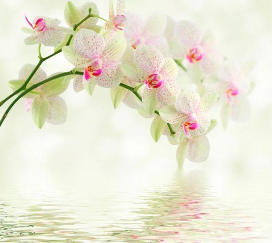 Фотообои Орхидеи над водой 1358