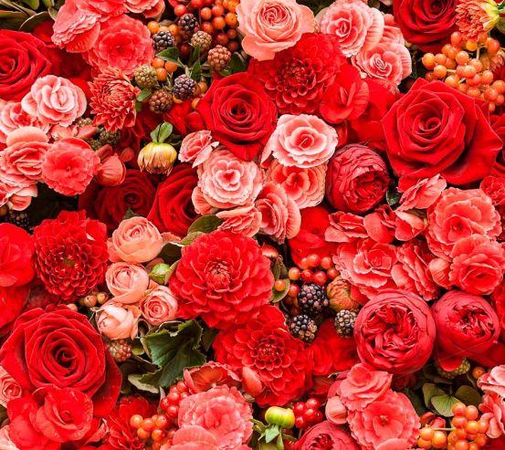 Фотообои Букет алых цветов 8498