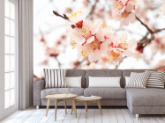 Фотообои Цветущий абрикос весной - 3