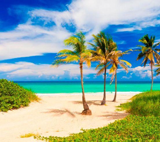 Фотообои Пальмы на море 11206