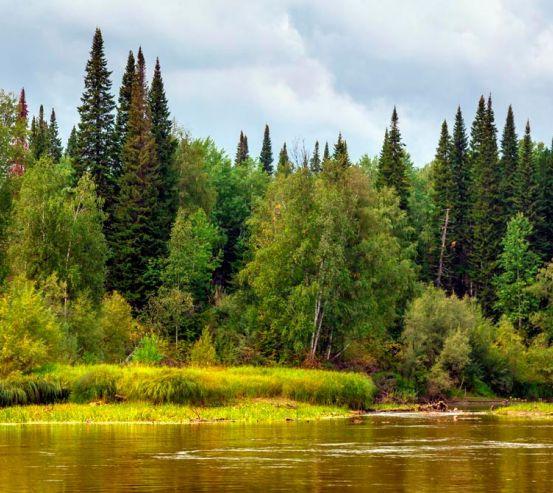 Фотообои Течение, лес 12780
