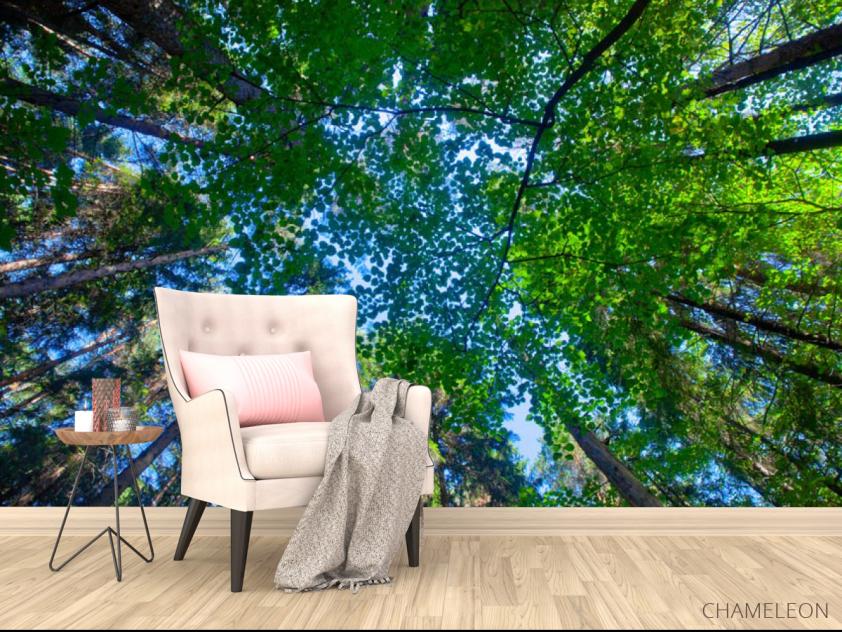 Фотообои деревья для потолка - 4