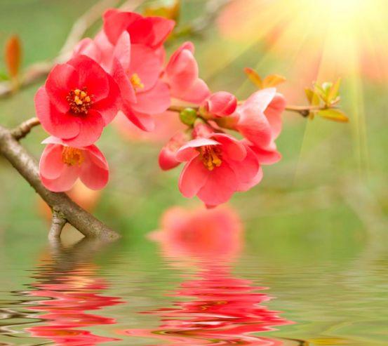 Фотообои Кипарис нежно-розовый 5169