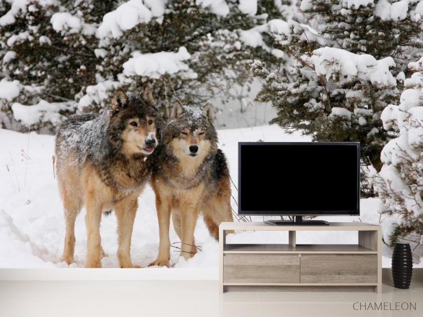 Фотообои Волки в снегу - 2