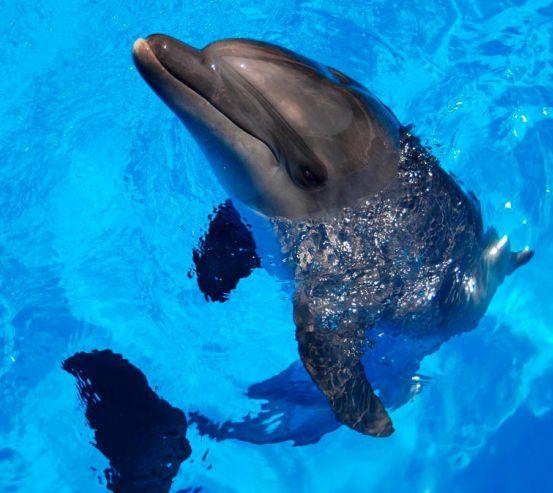 Фотообои Резвый дельфин 5297