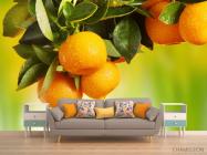 Фотообои Сочные апельсины - 1