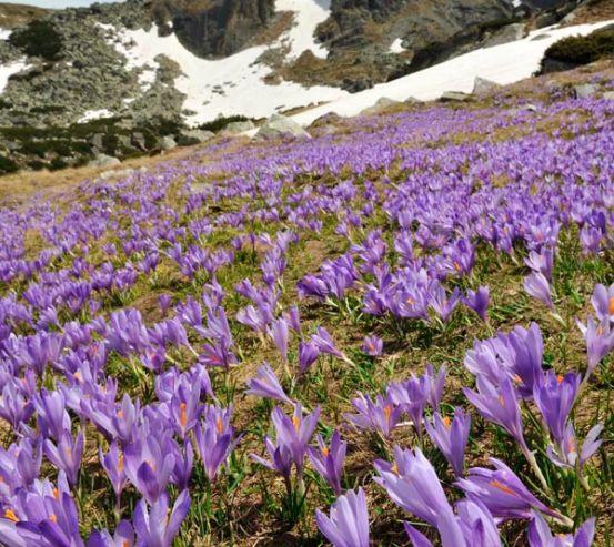Фотообои Лесная сказка, цветы 7208
