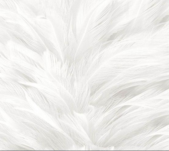 Фотообои Белые перья 25306