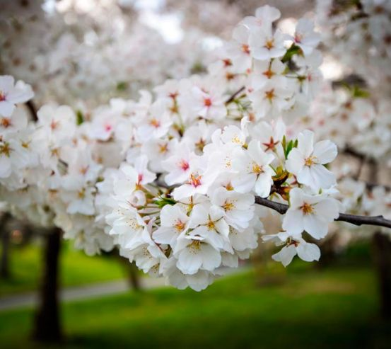 Фотообои Абрикосовые маленькие цветочки 5442