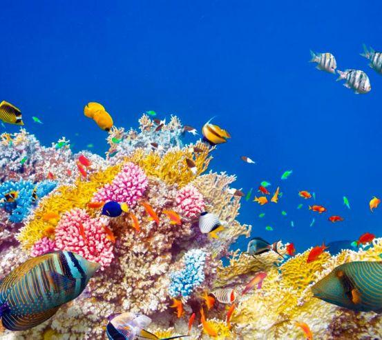 Фотообои Кораллы и рыбы 13897