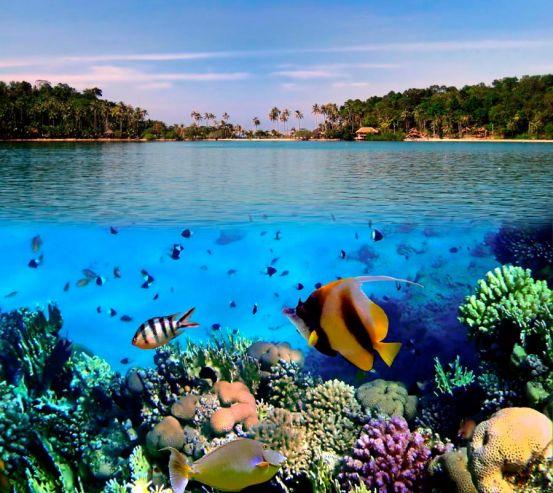 Фотообои Морские рыбки 0525