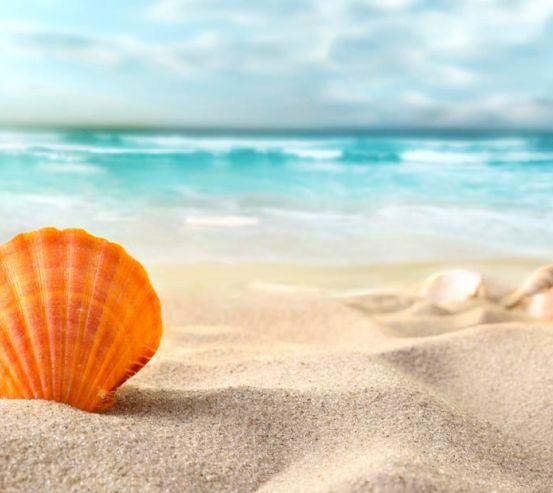 Фотообои Ракушка в песке 8683