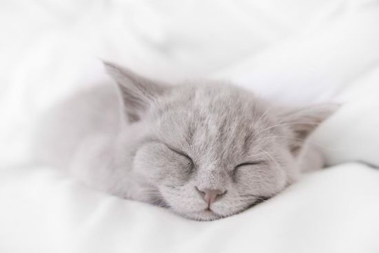 Фотообои серый котёнок спит