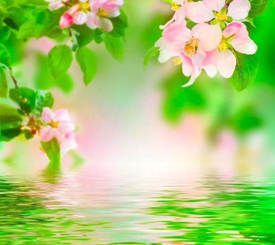 Фотообои Цветущая у реки вишня 1458