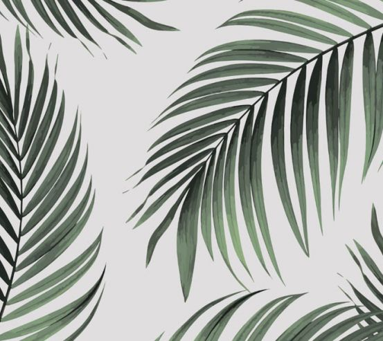 Фотообои Пальмовые ветки 26061