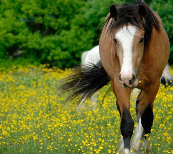 Фотообои Бег лошади 0461