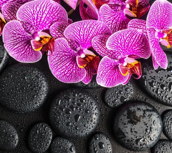 Фотообои сиреневые орхидеи на черных камнях с каплями 20758