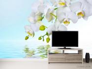Фотообои Белые орхидеи - 2