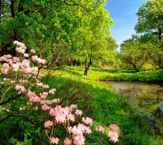 Фотообои Цветочки и лес 0740