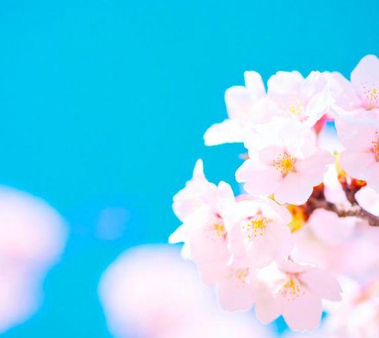 Фотообои Белые цветы в небе 3156