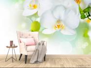 Фотообои Орхидеи в цвету - 4