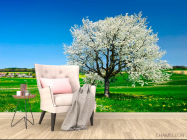 Фотообои Весна, цвет - 4