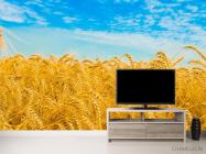 Фотообои Пшеница - 2