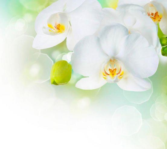 Фотообои Орхидеи в цвету 1367