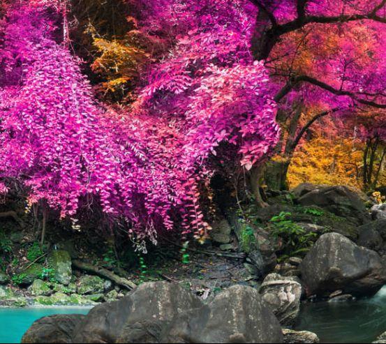 Фотообои Розовый лес 18431