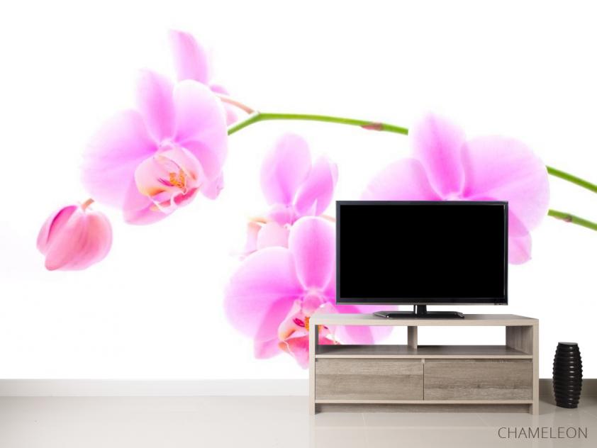 Фотообои Орхидеи распустились - 2