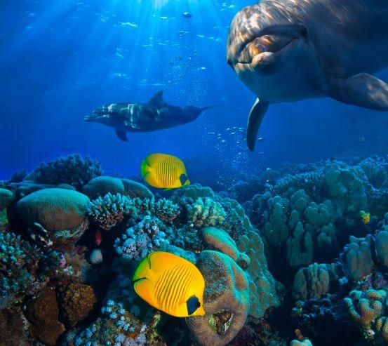Фотообои Дельфины и море 8890