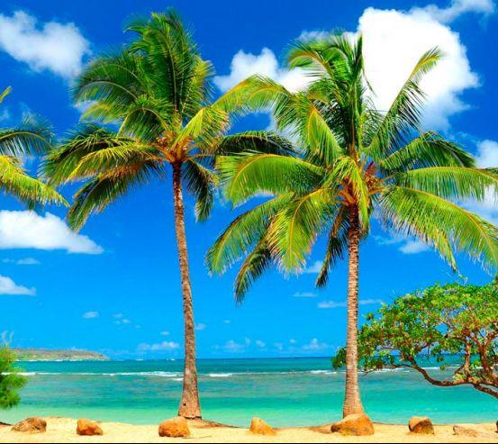 Фотообои Деревья на пляже 0578