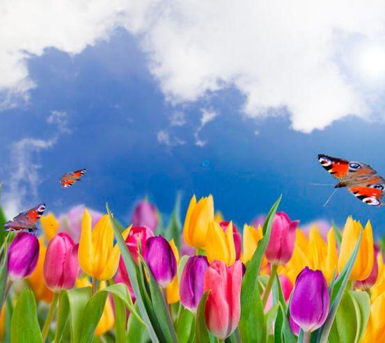 Фотообои Тюльпаны и бабочки 4909