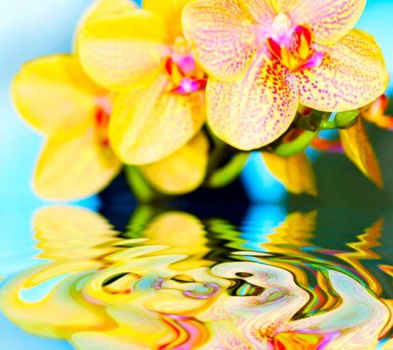 Фотообои Желтые орхидеи 1457