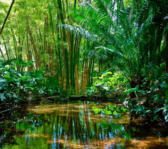 Фотообои В лесу глубоко 8745
