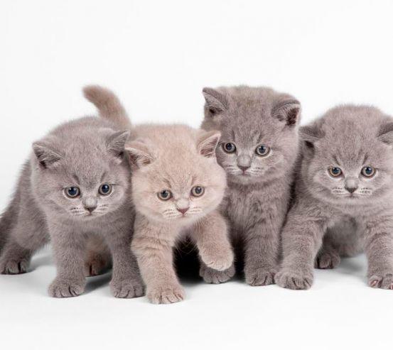 Фотообои Нксмелые котята 5792