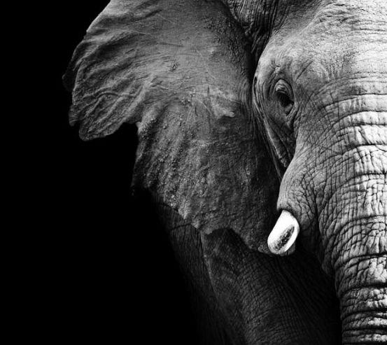 Фотообои Слон в темноте 13733