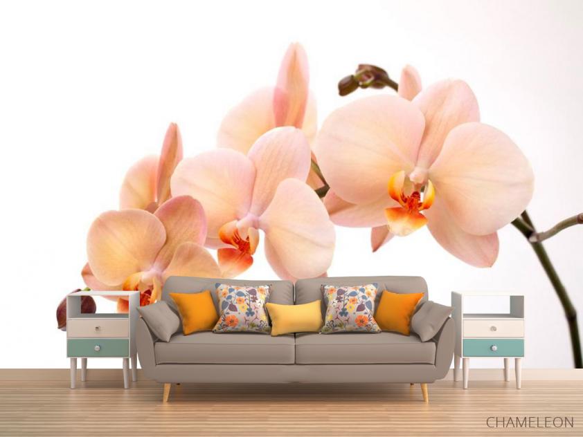 Фотообои Веточка орхидей - 1