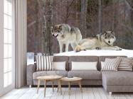 Фотообои два волка на снегу - 3
