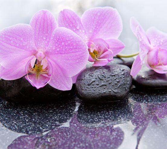 Фотообои орхидея на камне 21562