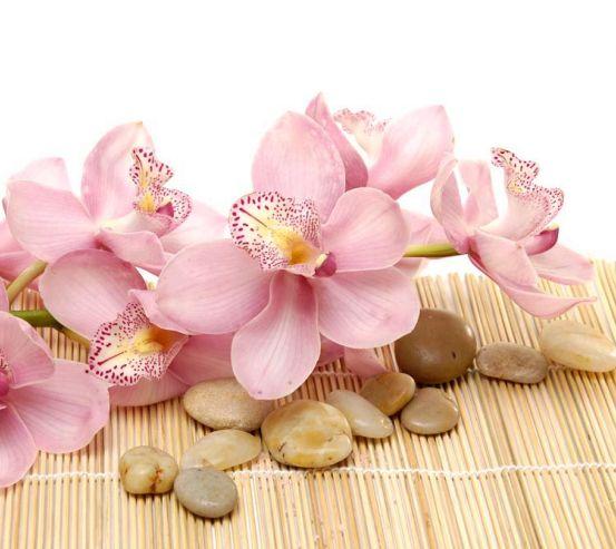 Фотообои Орхидея 11787