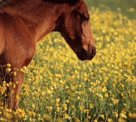 Фотообои Конь на лугу 7063